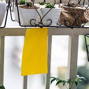 10 pièges à mouches en papier collant double face Jaune Sécurité enfant contre les mouches, les pucerons, les moustiques et les moisissures 15 x 20cm de la marque KINGLAKE image 0 produit