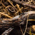 Anti fourmis BIO de ExAnts | Spray 100ml éloigne fourmis 100% naturel maison & jardin | alternative aux insecticides toxiques & pièges fourmis de la marque ExAnts image 3 produit