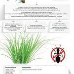 anti fourmis naturen TOP 10 image 2 produit
