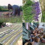 anti mite naturel lavande TOP 8 image 4 produit
