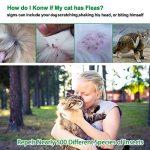 anti moustique pas cher TOP 2 image 2 produit