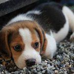 Anti tiques chien & anti puces chat BIO de FleaEx | Formule 100% naturel sans danger pour enfants | Produit en spray pour animaux de compagnies de la marque FleaEx image 3 produit
