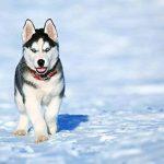 Anti tiques chien & anti puces chat BIO de FleaEx | Formule 100% naturel sans danger pour enfants | Produit en spray pour animaux de compagnies de la marque FleaEx image 5 produit