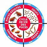 Beaphar - Diffuseur insecticide pour l'habitat des animaux 65m² - 200 ml de la marque Beaphar image 2 produit