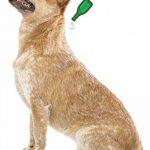 Beaphar - VETOpure, pipettes répulsives antiparasitaires - petit chien ( image 1 produit