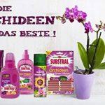 Celaflor Spray Careo Orchidée–200ml de la marque Celaflor image 3 produit