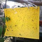 Effet élevé 30-Pack 25cm * 20cm double-face des pièges collants jaunes d'insectes pour le moucheron de champignon, les mouches blanches, le puceron, le mineur de feuille, d'autres insectes volants, bogues (30Pcs attaches de torsion incluses) de la marque image 1 produit