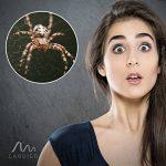 Gardigo 66975 - Attrape araignée & insectes de la marque Gardigo image 4 produit