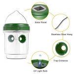 guêpe ou abeille TOP 12 image 4 produit