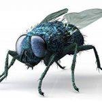 ISOTRONIC moustiquaire moustiquaire mouches Piles insectes contre les mouches de la marque Isotronic image 3 produit