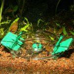 JBL LimCollect II Piège à Escargots pour Aquariophilie de la marque JBL image 1 produit