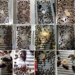Kicode Les pièges de blattes pour Pesticide Tuer les fourmis Roaches araignées et autres insectes Insectes Non toxique et écologique de la marque Kicode image 2 produit