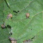 limaces et escargots défense par Exterminateurs choix- répulsif pulvérisation 0.9L fonctionne sur tous les types d'escargots et les limaces-parfait pour la boîte à outils de tout jardinier   tout répulsif spray jardin naturel   de plein air de la marque E image 1 produit
