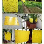 Lot de 20 Pièges à Insectes Volants Sticky Pièges de Colle Double Face Jaune Papiers Anti-insectes Blancs Mouches Abeilles Guêpes Pucerons Mouches des Terreaux pour Jardin Plante Fleur Fruits 15*25cm de la marque QCHOMEE image 2 produit