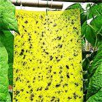 moucheron plante TOP 12 image 3 produit