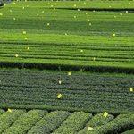moucheron plante TOP 12 image 4 produit