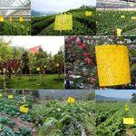 moucheron plante TOP 4 image 4 produit