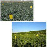 moucheron plante TOP 9 image 3 produit