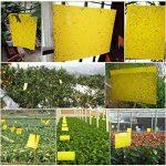 moucherons dans les plantes TOP 11 image 4 produit