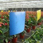 moucherons dans les plantes TOP 14 image 1 produit
