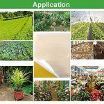 moucherons dans les plantes TOP 14 image 3 produit