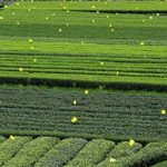 moucherons dans les plantes TOP 7 image 3 produit
