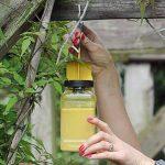 piège à guêpes bouteille TOP 5 image 2 produit