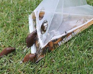 piège à limace naturel TOP 12 image 0 produit