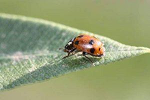 plante anti puceron TOP 2 image 0 produit