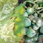 plante intérieur anti mouche TOP 2 image 1 produit