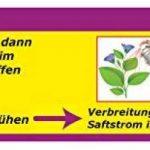 plante intérieur anti mouche TOP 4 image 2 produit