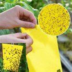 plante intérieur anti mouche TOP 5 image 1 produit