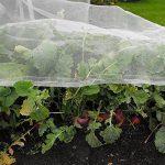 plantes anti moustiques efficaces TOP 6 image 2 produit