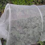 plantes anti moustiques efficaces TOP 6 image 3 produit