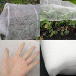 plantes anti moustiques efficaces TOP 6 image 4 produit
