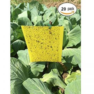 plantes anti moustiques efficaces TOP 8 image 0 produit