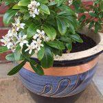 plantes contre les limaces et escargots TOP 0 image 3 produit