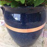 plantes contre les limaces et escargots TOP 0 image 4 produit