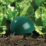 plantes contre les limaces et escargots TOP 2 image 1 produit
