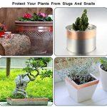 plantes contre les limaces et escargots TOP 7 image 3 produit