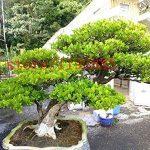 plantes insectifuges TOP 2 image 2 produit