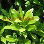 plantes insectifuges TOP 2 image 3 produit