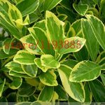 plantes insectifuges TOP 2 image 4 produit