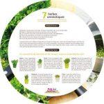 Plateau 7 herbes aromatiques de la marque image 1 produit