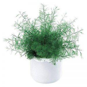 Provence Outillage 04473 Plante de Neptune Vert de la marque Provence Outillage image 0 produit