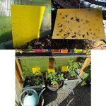 puceron plante extérieur TOP 8 image 1 produit