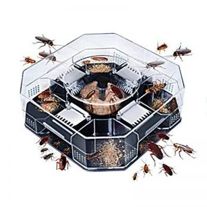 que faire contre les fourmis TOP 2 image 0 produit