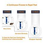 repousser fourmis maison TOP 11 image 3 produit