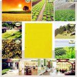 répulsif moucherons plantes TOP 6 image 2 produit