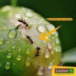 Solabiol SOFOTU30 Anti-Fourmis Tubes Gel D'origine Naturel 2x15 G, Incolore, 9.8 x 2 x 25.5 cm de la marque Solabiol image 1 produit